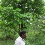 Agroforestry - multistoreyed plant resources
